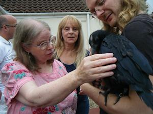 Picture of Annabel with the cheeky carrion crow