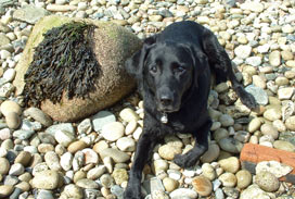 Picture of Mandy on Arran Pebble Beach