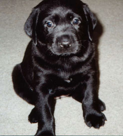 Picture of Mandy as a Puppy